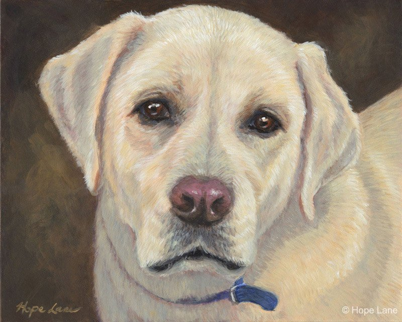 Ozzie, custom pet portrait of a Yellow Labrador Retriever by Hope Lane