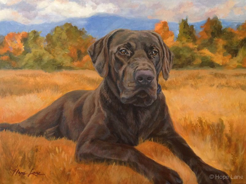 Bear, custom pet portrait of a Chocolate Labrador Retriever by Hope Lane