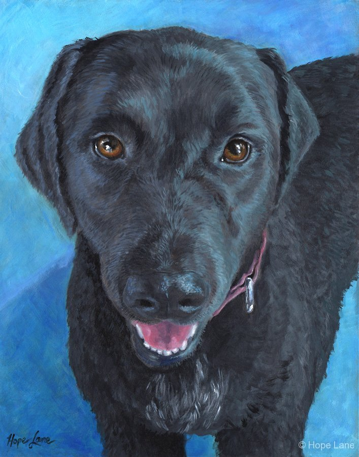 Camo, custom pet portrait of a springer spaniel, black lab mix by Hope Lane