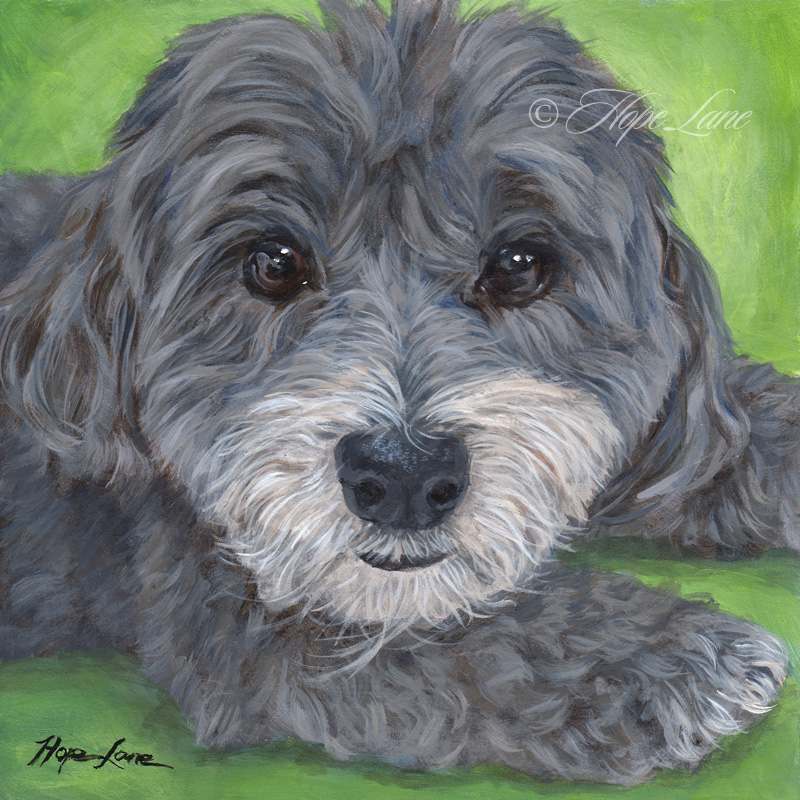Stella the Havanese custom pet portrait painting by Hope Lane