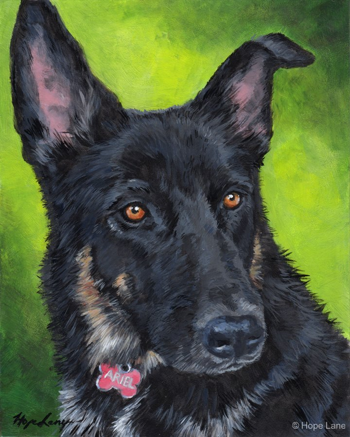 Ariel, German Shepherd custom pet portrait by Hope Lane