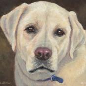 Ozzie, custom pet portrait of a Yellow Labrador Retriever by Hope Lane