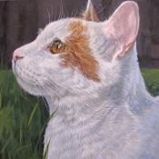 Chance, custom pet portrait of an ginger cat by Hope Lane