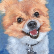 Gunny, the Pomeranian custom pet portrait painting by Hope Lane