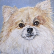 Yogi, custom pet portrait of a Pomeranian by Hope Lane