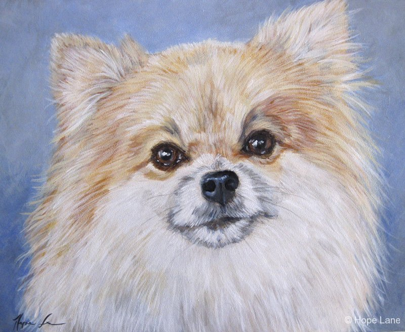 Yogi, custom pet portrait of a Pomeranian by Hope Lane
